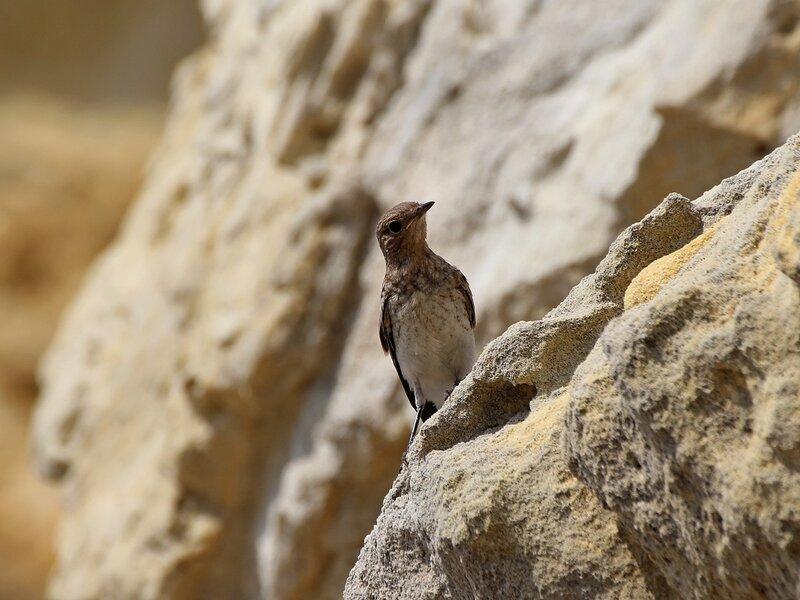 Лисёнок в камнях на Черноморском побережье Крыма IMG_5520.JPG