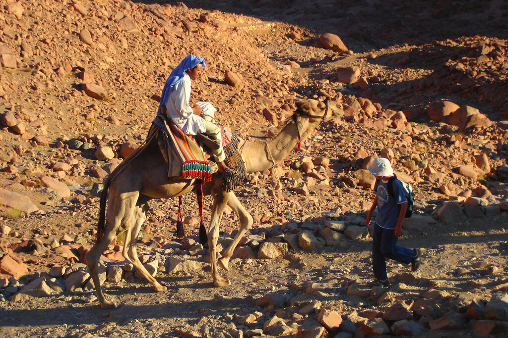 Фото 18. Наездник. Сфотографировал его во время экскурсии в Монастырь Святой Екатерины в Египте