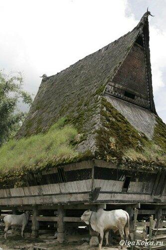 Традиционный дом батаков
