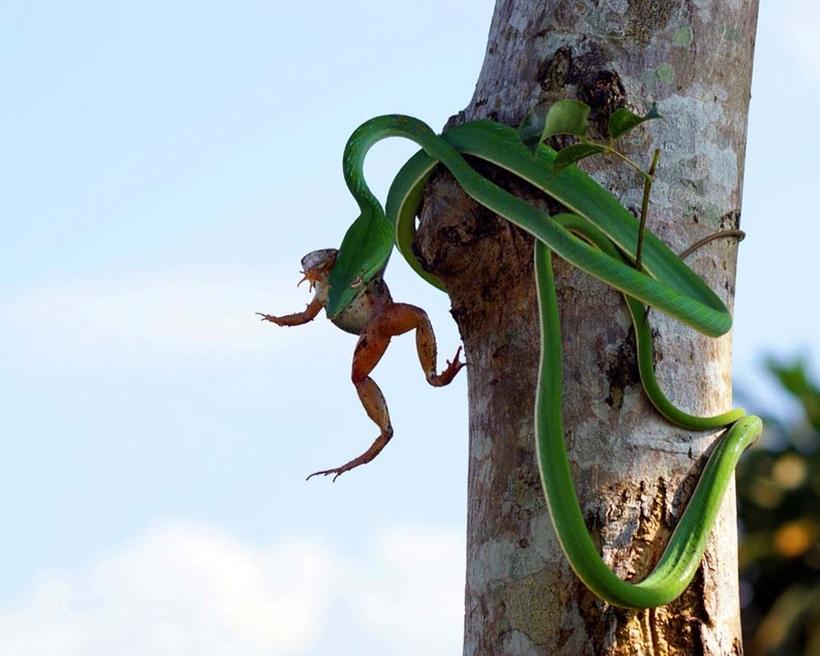 Пугающие фотографии змей 0 134ac4 cf65b88a orig