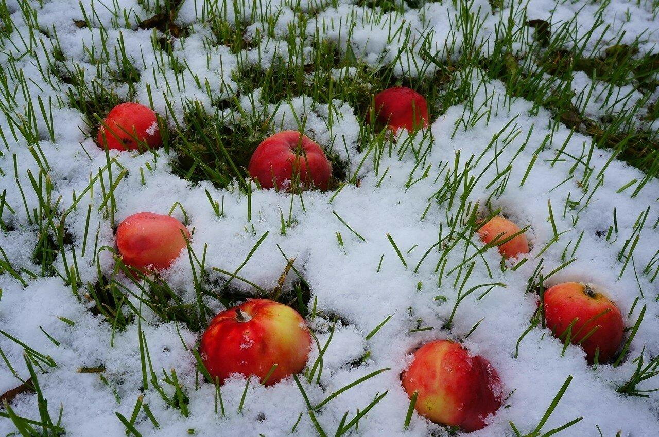 картинка анимация яблоки на снегу качество