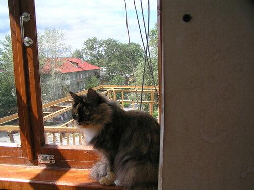 Кошка Соня на балконе