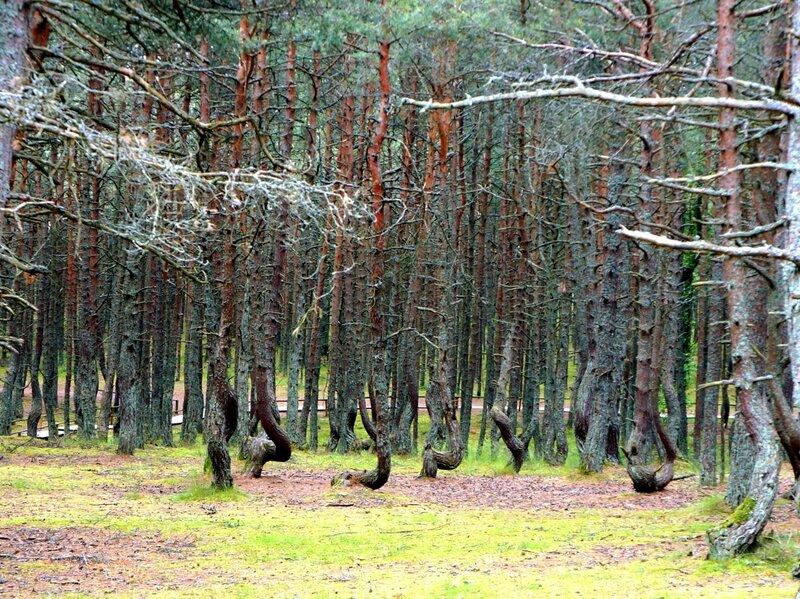 Деревья с изломами