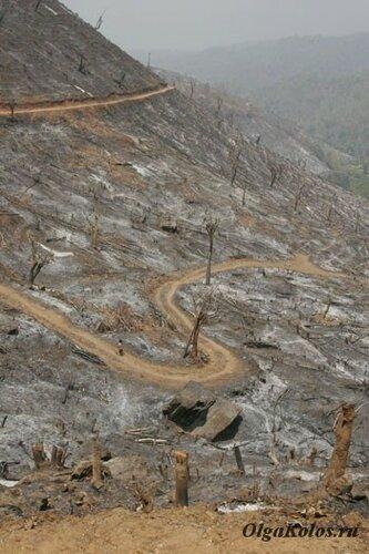 Традиционный для горных народов ЮВА способ очистки земли под будущие посевы