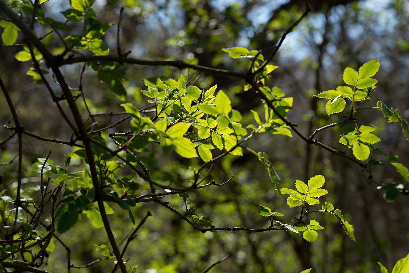 Vegetation / фото Matthew Piper