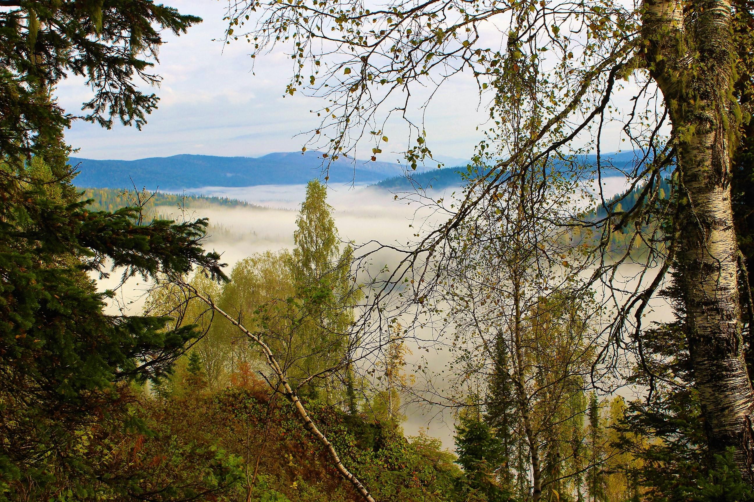 Окутал долину туман