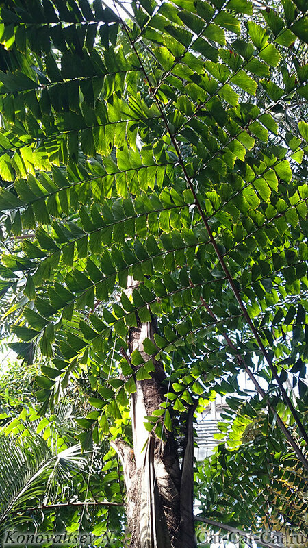 Экзотические растения оранжереи Санкт-Петербурга, ботанический сад