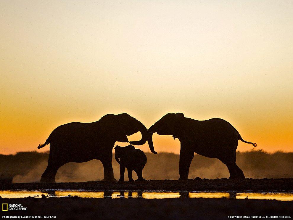 HD дикая природа животные обои