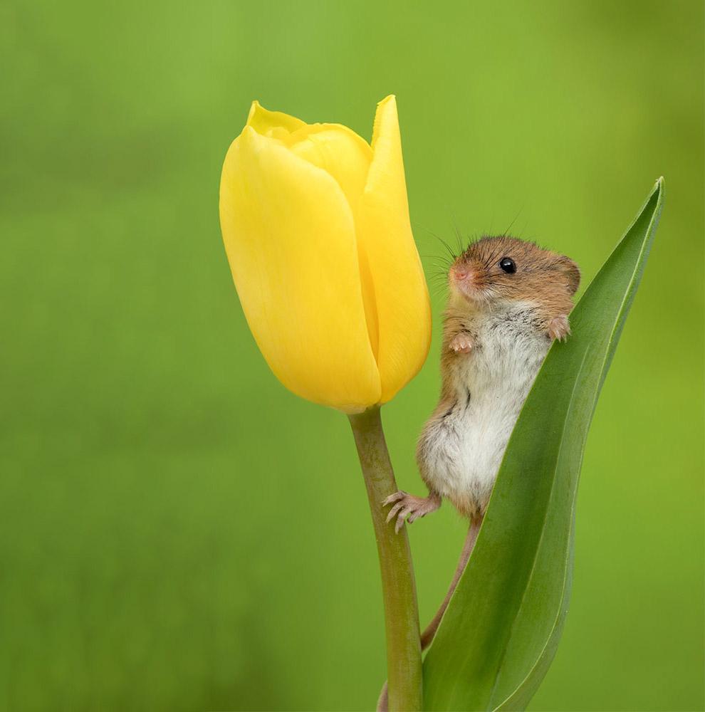 мыши позитив мышь Фотография фотограф день студии