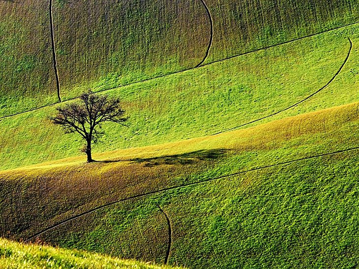 В мире дикая природа фото месяца