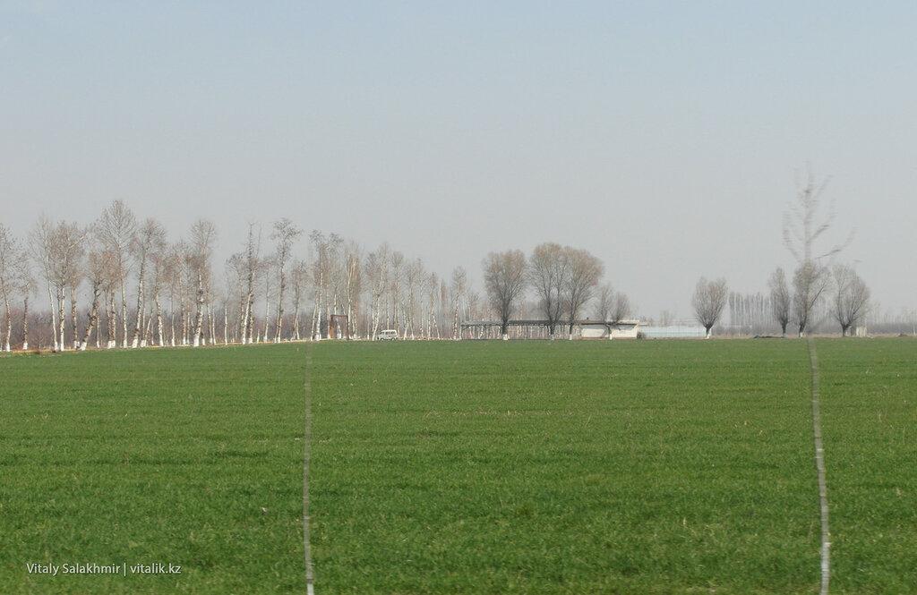 Поле с зеленой травой, дорога Ош-Андижан