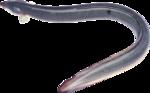 рыба (58).png