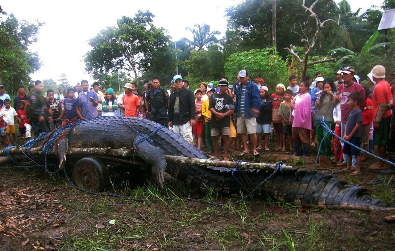 Картинки по запросу самая большой крокодил в мире