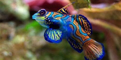 С помощью употребления рыбы можно достичь полноценного сна