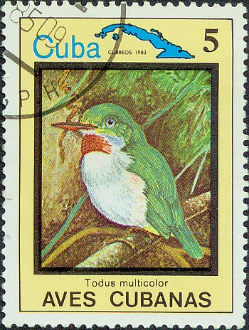 cuban-tody-026.jpg