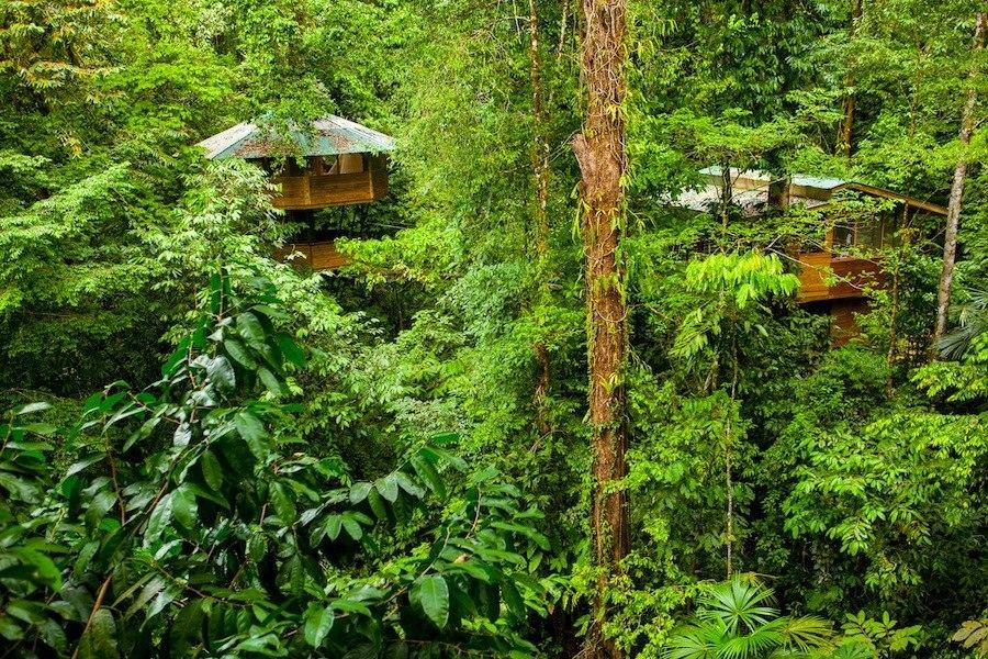 Эрика и Мэтт купили 600 акров земли, предназначенной для вырубки леса. Им удалось сохранить лес и сд