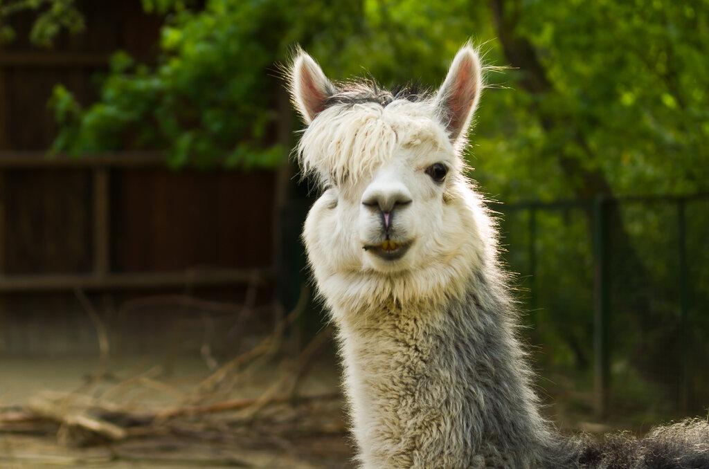Стиляга из Латинской Америки. Что посетить во Франкфурте-на-Майне? Местный зоопарк.