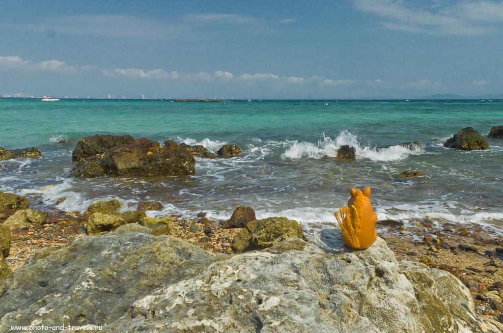 Коник Борис любуется Сиамским заливом и видом Паттаи на заднем плане. Дело происходит на пляже Monkey Beach на острове Ко Лан (Koh Larn). Куда поехать на море после путешествия по Китаю.