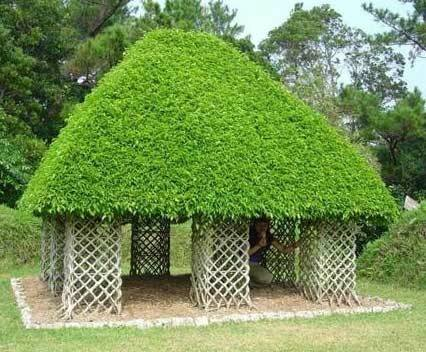 Дом ИЗ дерева - живая беседка