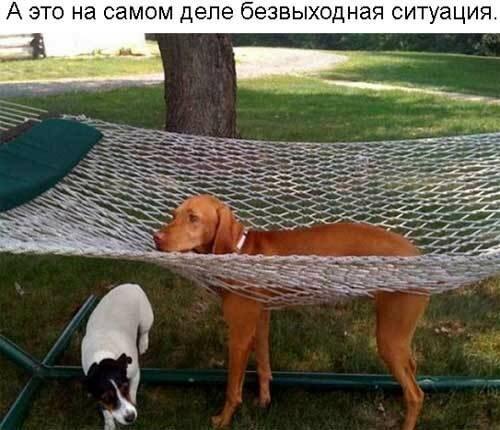 Взаимодействие животных с мебелью