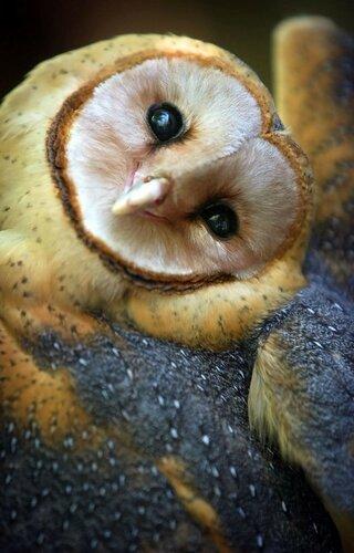owls03.jpg