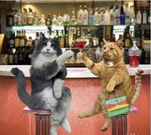 Картинка С первым днем весны! Кот и кошка с фужерами открытки фото рисунки картинки поздравления