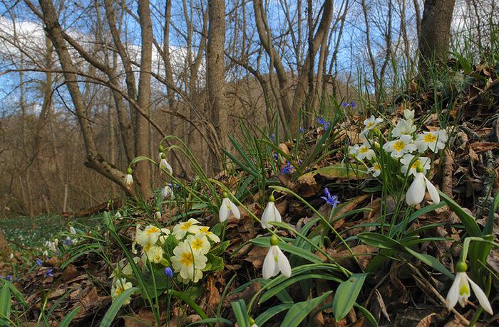 Открытки Всемирный день дикой природы. Весна в лесу