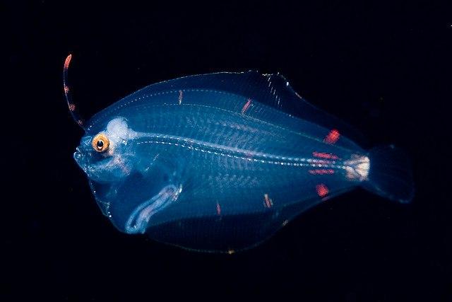 Прозрачные жители подводного мира