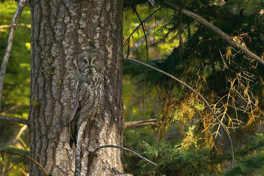 камуфляж маскировка дикая природа хищники в природе исчезающие виды Фотография фотограф автор