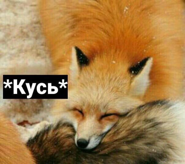 Любовь-это кусь