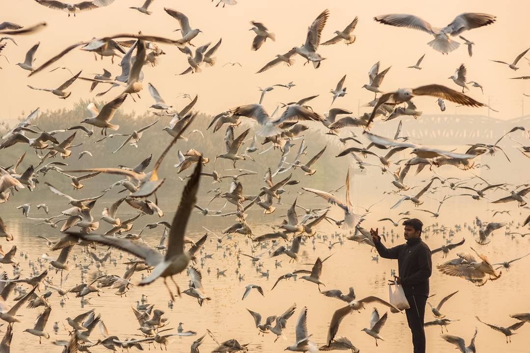 The Winter Migration of Siberian Seagulls in Delhi Photographed by Navin Vatsa