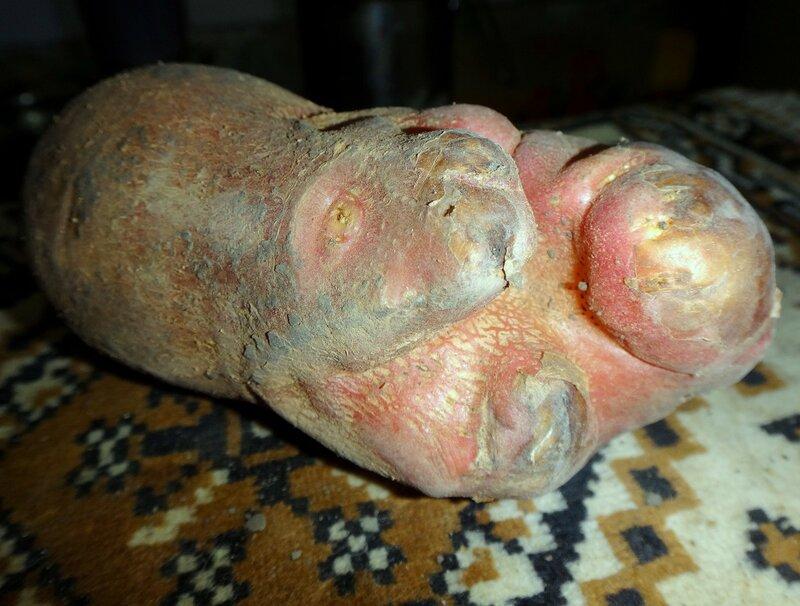 Произведение Природы ... картофельный вариант ... DSC04089.JPG