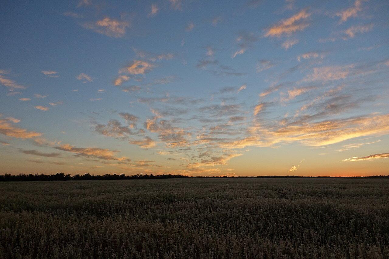 всё краше небо над посевами овса