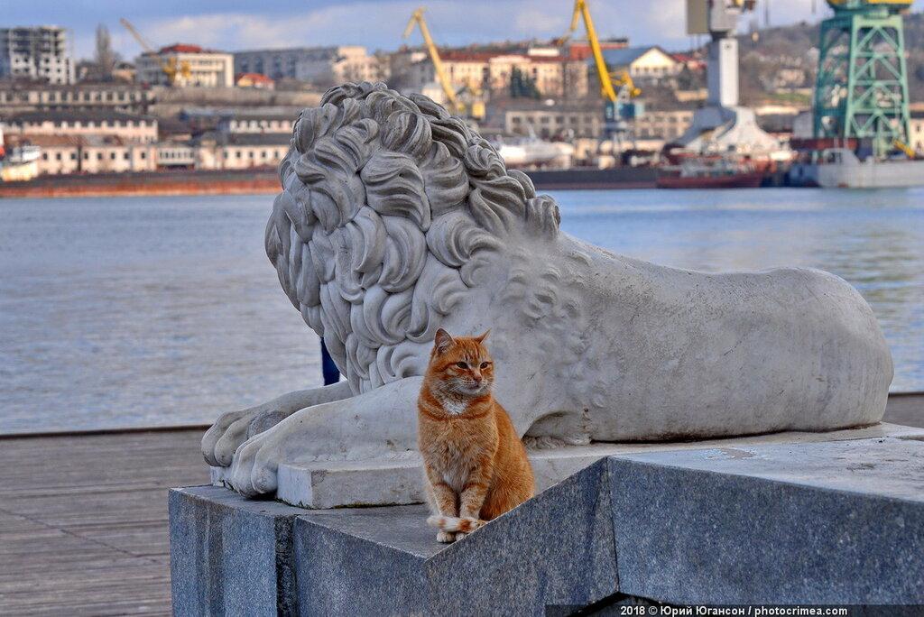 теста кошки в севастополе картинки дог испанском