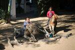 Палестинские дети сидят на чучелах экзотических животных в парке Рафах в южной части сектора Газа. По словам владельцев, животные умерли из-за того, что их нечем было кормить. Рафах, Палестина, 3 января 2017 года. Фото: Ibraheem Abu Mustafa / Reuters