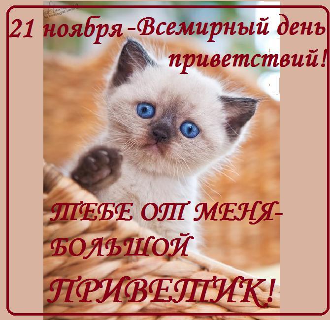 Открытки. Международный день приветствий. Котенок