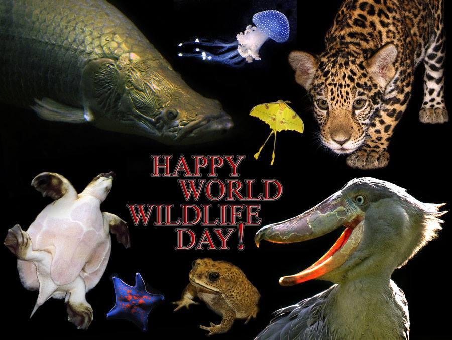 Открытки Всемирный день дикой природы. С праздником!