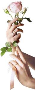 рука с розой