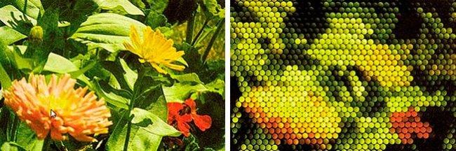 Откуда мы знаем, как видят пчёлы?