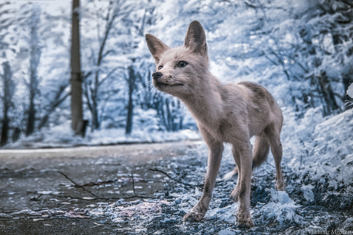 Chernobyl Captured in Infrared (13 pics)