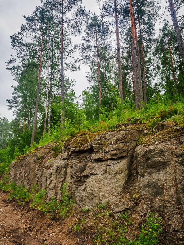 Сосны растут прямо на камнях.