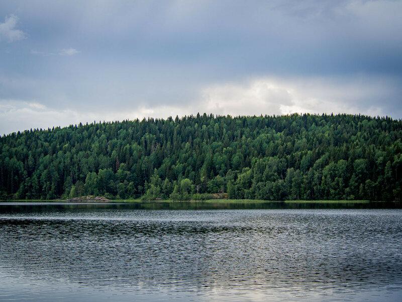 Лесистый берег.