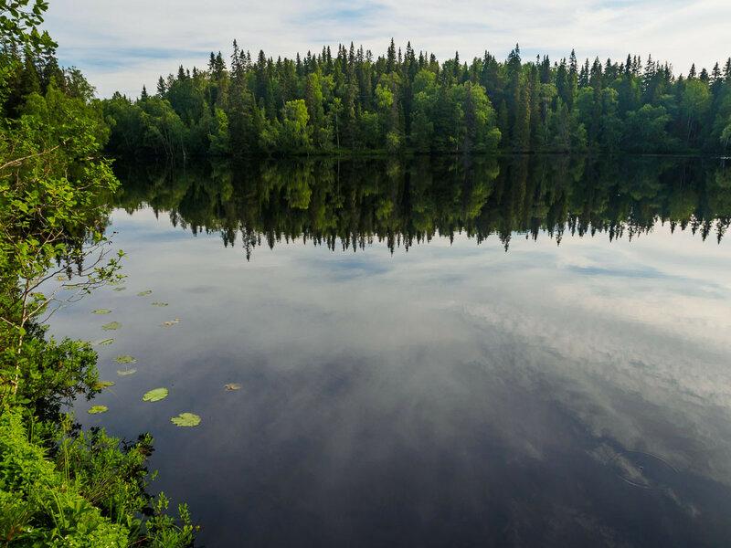 Густой смешанный лес вплотную подступает к водам.