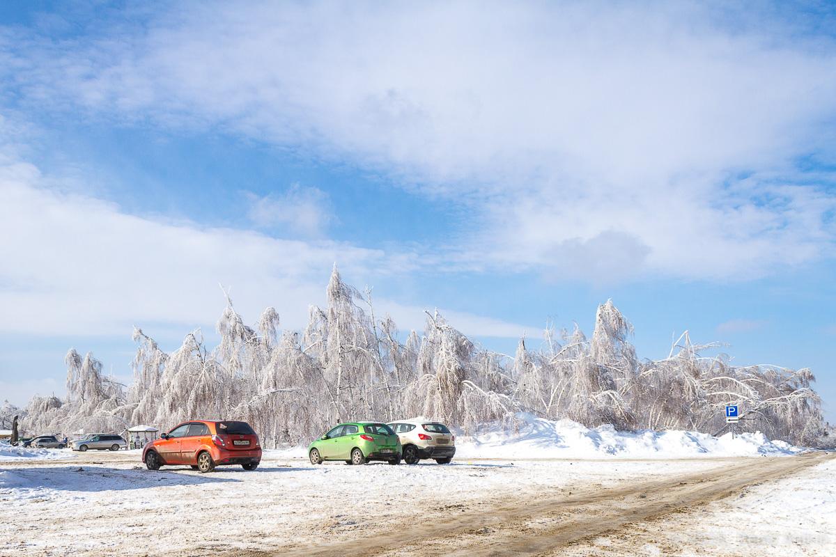 березы в снегу фото 1