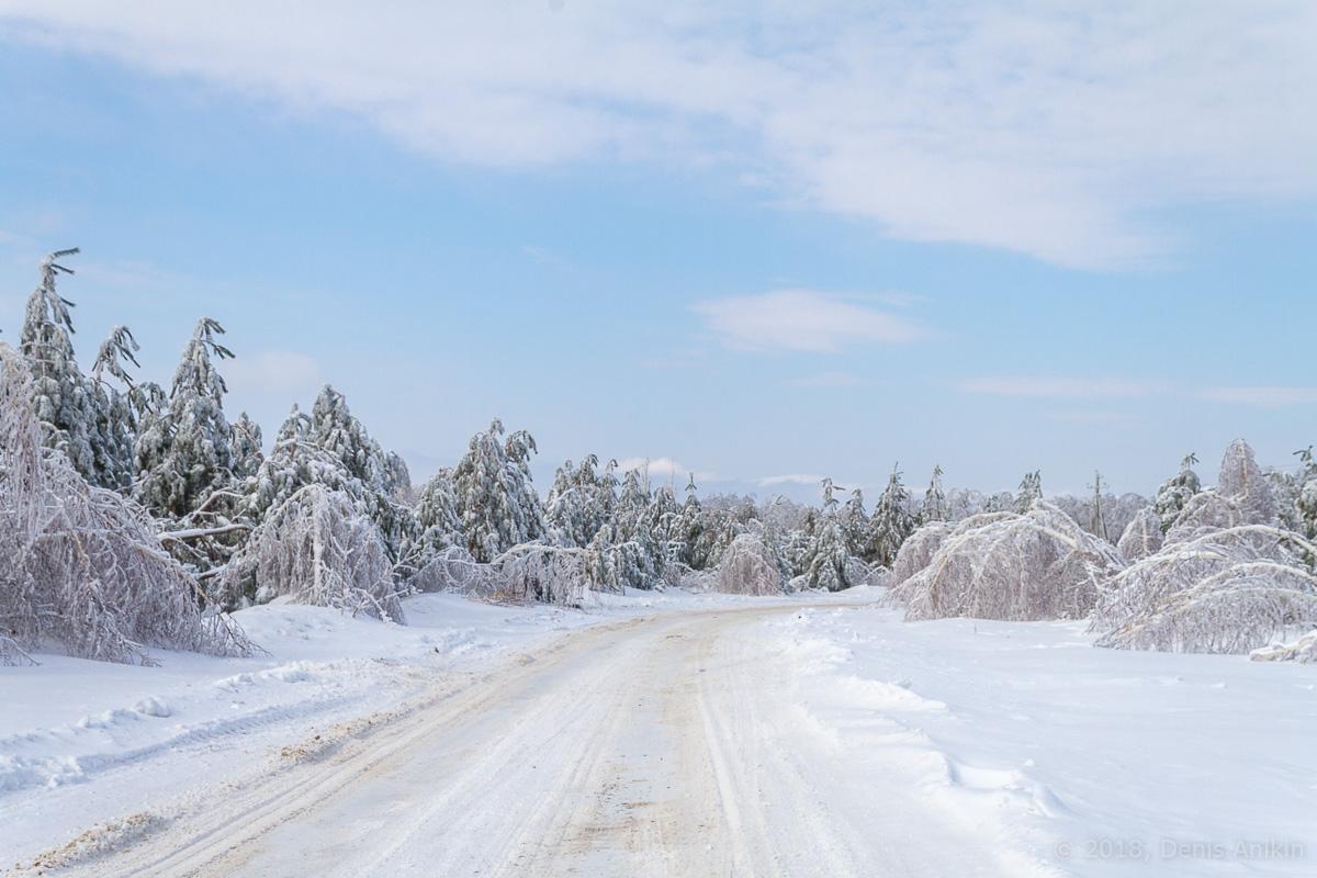 березы в снегу фото 10