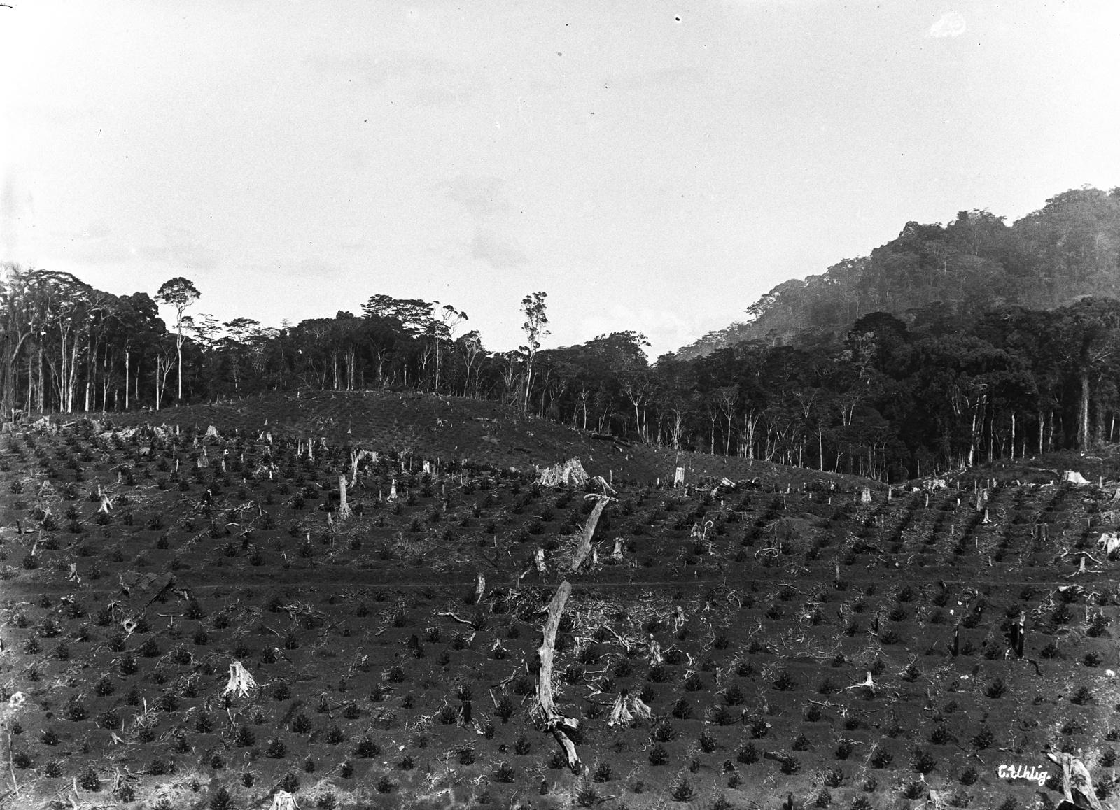 89. Возделываемые поля на расчищенной территории