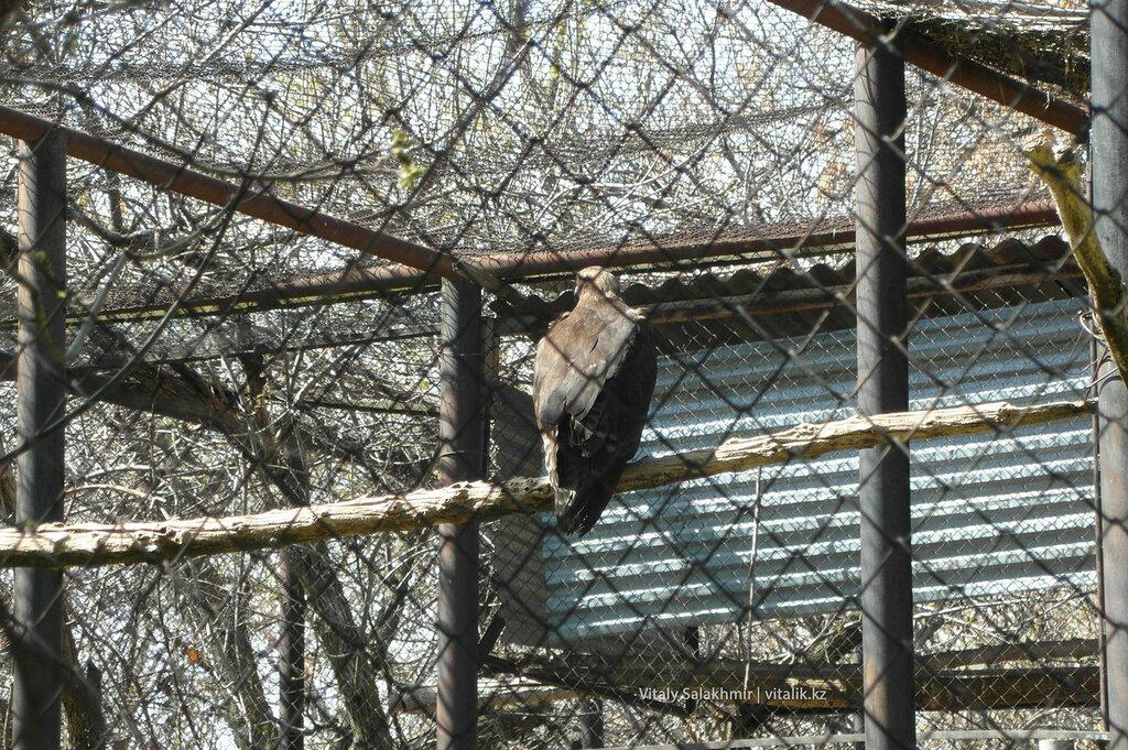 Орел в зоопарке Шымкента