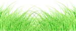 MDesigns_element4.png