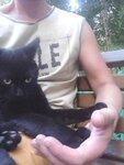 Чёрный кот и я