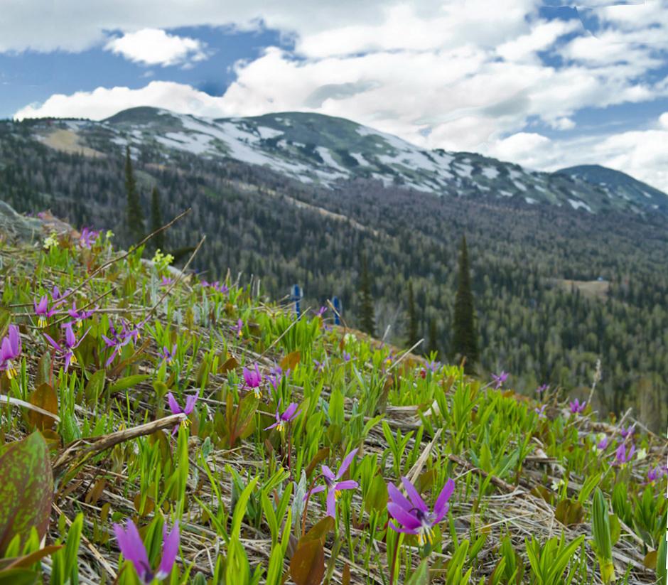11. Панорама гор у горнолыжного курорта Шерегеш летом 2014. Отчеты туристов. Куда поехать в Кемеровской области на машине.